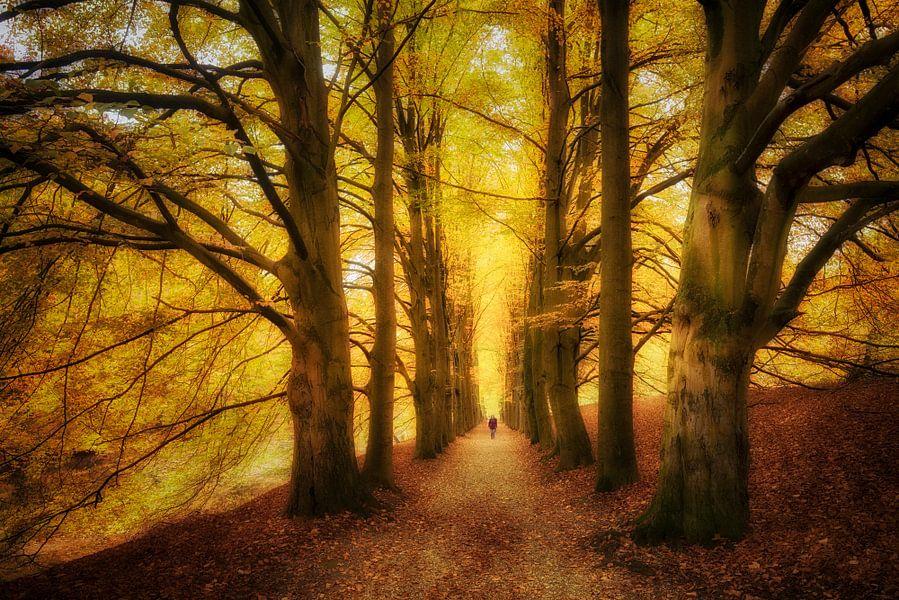 Herfstbomen in park Zypendaal van Elroy Spelbos