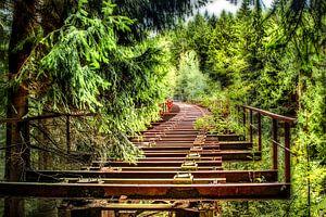 De verlaten brug in het bos van Johnny Flash