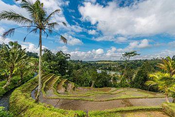 Rijstvelden van Jatiluwih Bali von Lex van Doorn