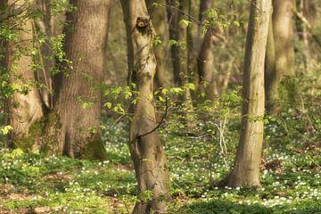 Ontluikend bos van peter reinders