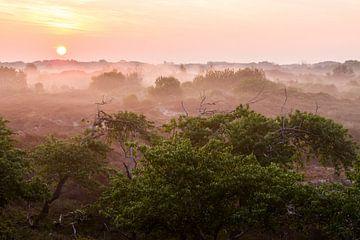 Duinen bij Wassenaar in de mist bij zonsopkomst van Menno van Duijn