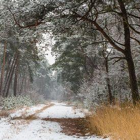 Path Of Snow van William Mevissen