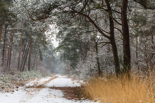 Path Of Snow van