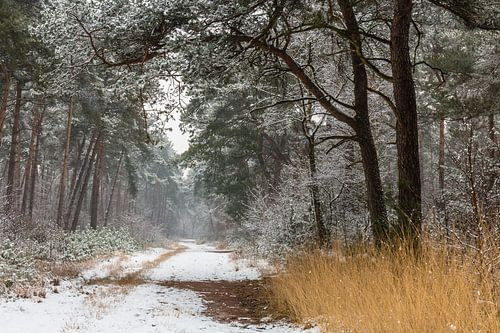 Path Of Snow