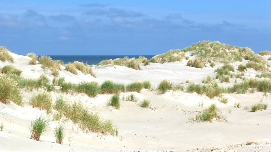 De duinen van Terschelling van Jessica Berendsen