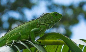 tropische reptielen van Jean Pierre Vlaun