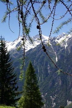 Het leven in de Zwitserse bergen op een zomerse dag van Mirjam Rood-Bookelman