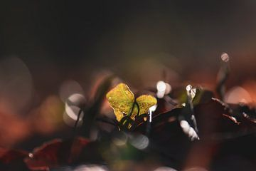 grünes Herz von Tania Perneel