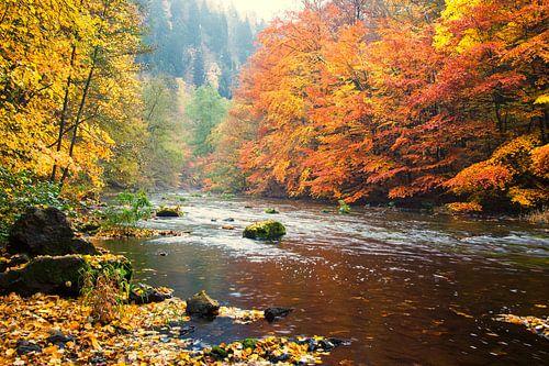 bos landschap van