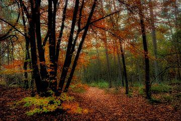 Herbst in Birkhoven Amersfoort von Watze D. de Haan
