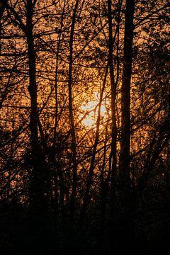 Sonne von Sanne Van der avoird