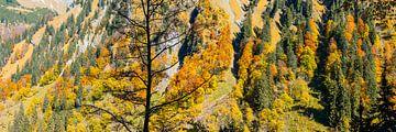 Mountain forest van Walter G. Allgöwer