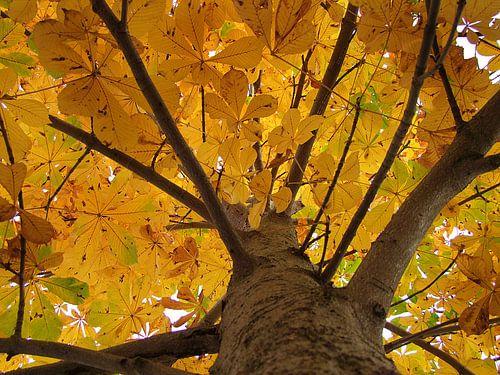 Chestnut in autumn van