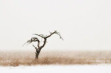 Eenzame boom von Paul Arentsen