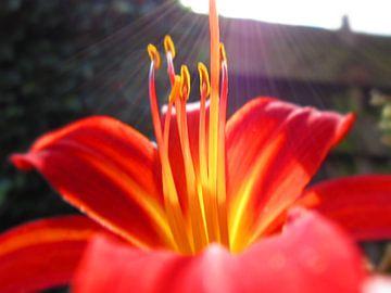 De zon die schijnt op jouw achtertuin in de veluwe van Wilbert Van Veldhuizen