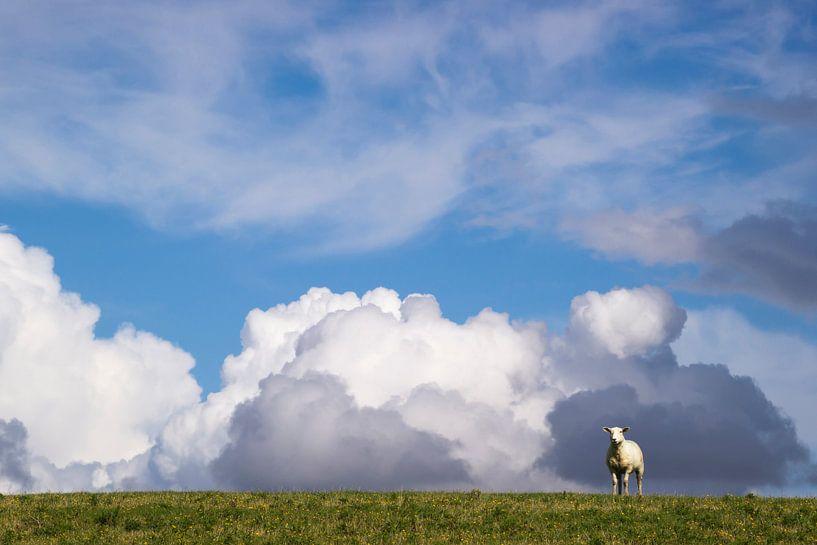 Schaf auf dem Deich von Annette Sturm
