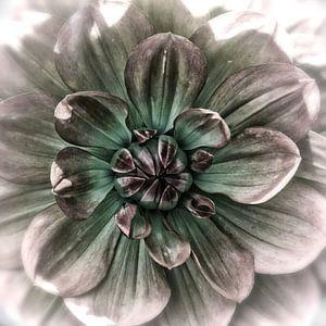Hart van een paarse dahlia