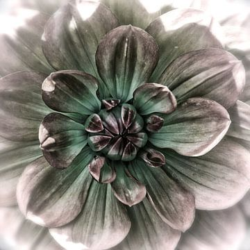 Hart van een paarse dahlia van Rietje Bulthuis