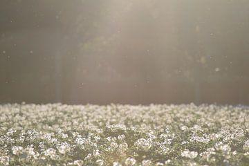 Aardappelveld in bloei 3 von Manon Sloetjes