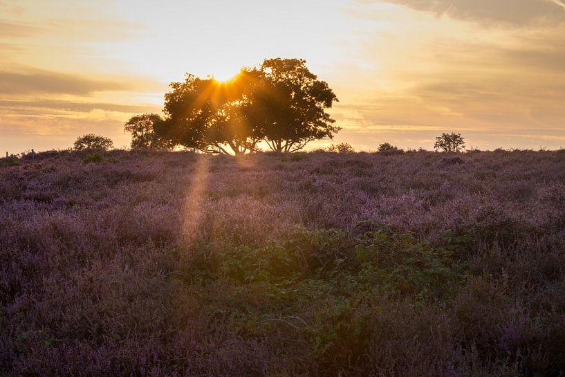 Hoorneboegse Heide - 2 van Nuance Beeld
