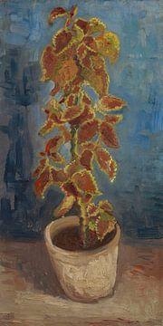 Coleuspflanze in einem Blumentopf, Vincent van Gogh