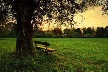 Romantische Bank unter einem Baum im Sonnenuntergang