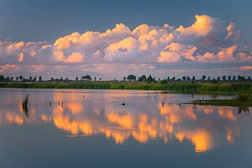 Naturschutzgebiet 't Roegwold, Groningen von Henk Meijer Photography