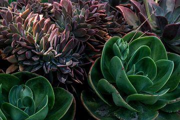 Vet planten van Chantal van der Hoeven