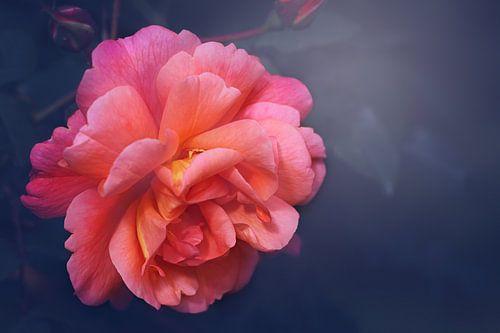 Het was haar roos.. van LHJB Photography