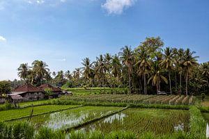 prachtig landschaps uitzicht op rijstterrassen en het huis van een boer