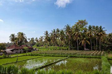 prachtig landschaps uitzicht op rijstterrassen en het huis van een boer van Tjeerd Kruse