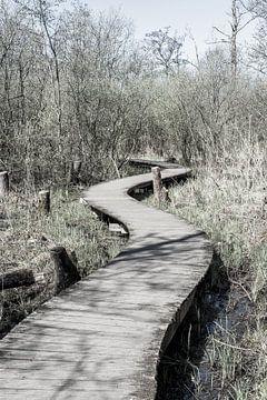 Holzsteg durch Naturschutzgebiet | Niederlande von Photolovers reisfotografie