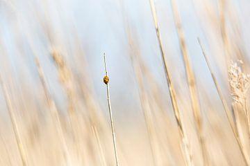 Lieveheersbeestje van Scholtes Fotografie