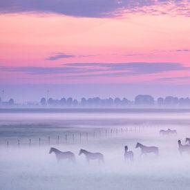 Chevaux dans la brume du matin sur Esmeralda holman