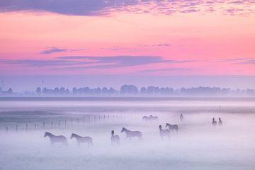 Chevaux dans la brume du matin
