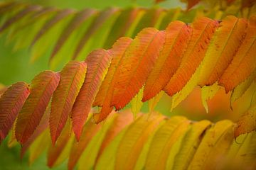 Herfst van Hennie Marks