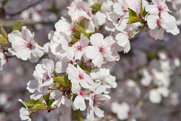 Bunte Frühlingsblüte in der Sonne von J..M de Jong-Jansen