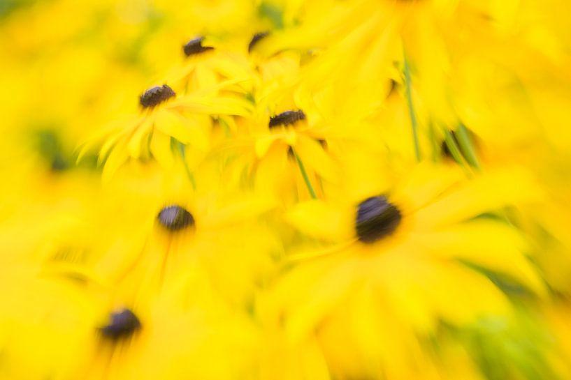summer yellow van jowan iven