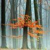 Letztere Blätter von Lars van de Goor