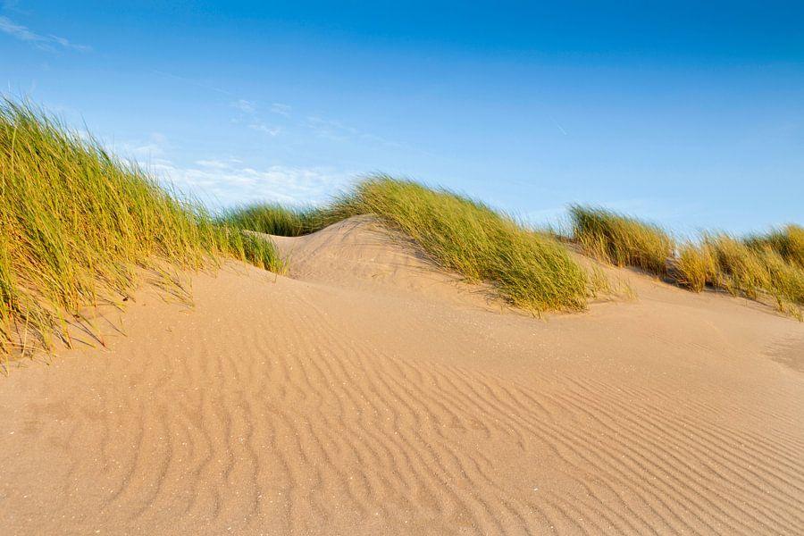 duinen langs de Nederlandse kust van gaps photography