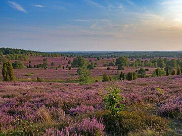 Heide bij zonsondergang van Katrin May