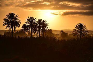 Sonnenuntergang durch Dattelpalmen in einer Oase im Souss Massa National Park, Südmarokko von Catalina Morales Gonzalez