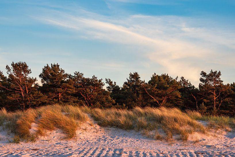 Küstenwald an der Ostseeküste in Prerow von Rico Ködder