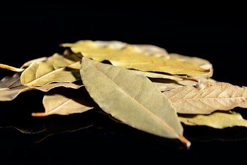 Gedroogde laurierbladeren op een zwarte achterground