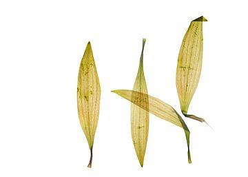 Bladeren van Akira Peperkamp