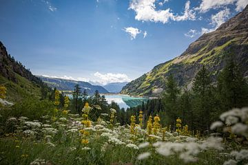 Flowered Dam von Frans Andree