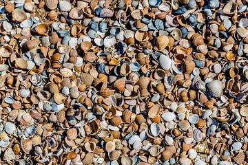 Muscheln von Fotografie Jeronimo