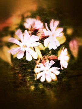 Blumen von Elo Mars