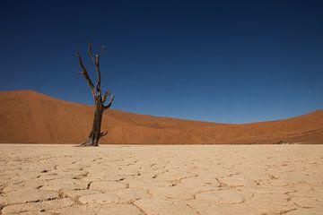 Deadvlei, Namibie sur Dennis Van Den Elzen