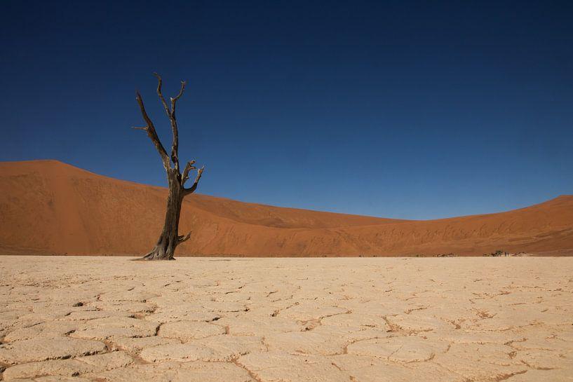 Deadvlei, Namibië van Dennis Van Den Elzen